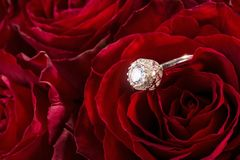 Red roses with engagement ring Stock Images