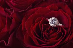 Red roses with engagement ring royalty free stock photography