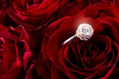 Red roses with engagement ring. In the petals Royalty Free Stock Photo
