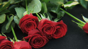 Red Roses Falling Down stock footage