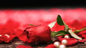 Red roses falling into view. On the rose petals and pearls stock video