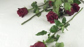 Red roses falling on white background with water slow motion stock footage video stock video footage