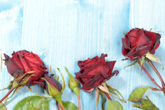 Red Roses on a Flat Layer Royalty Free Stock Photos