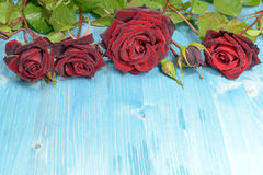 Red Roses on a Flat Layer Stock Images