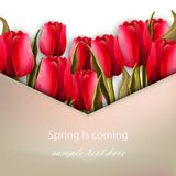 Red Roses flower greeting. Spring is coming card Vector. Illustration Stock Photo