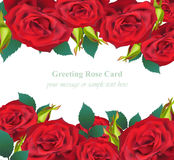 Red Roses flower Invitation card Vector. Delicate floral realistic illustration. S Stock Photo
