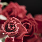 Red roses flowers bouquet close up Royalty Free Stock Photography