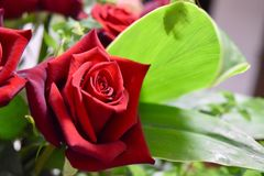 Red rose special with green. Red roses flowers bouquet Royalty Free Stock Images