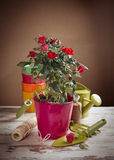 Red roses flowers and gardening tools Royalty Free Stock Photography