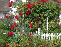Red roses and flowers in the summer garden Royalty Free Stock Photos