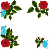 Red roses and forget-me Royalty Free Stock Images