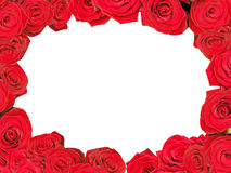 Red roses frame. Decorative red roses frame isolated in white Royalty Free Stock Photo