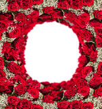 Red roses frame, isolated on white background Stock Image