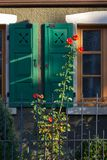 Red roses on framework facade with window green shutters. On a sunny summer morning in south germany city schwaebeisch gmuend royalty free stock photos