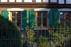 Red roses on framework facade with window green shutters. On a sunny summer morning in south germany city schwaebeisch gmuend royalty free stock images