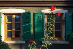Red roses on framework facade with window green shutters. On a sunny summer morning in south germany city schwaebeisch gmuend stock image