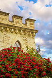 Red roses in front of castle stock image