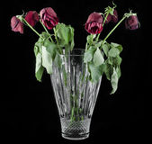 Red Roses Full. Six dying red roses in crystal vase over black back round Royalty Free Stock Image