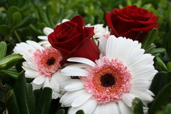 Red Roses and Gerbera Daisies Stock Photo
