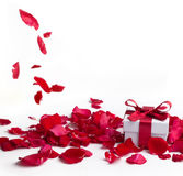 Red roses and gift box on white background Stock Photography