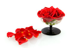Red roses in glass with rose leaves. Isolated on white background royalty free stock images