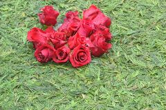 Red roses on green background stock photo