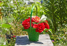 Red roses in a green basket.  There are a blurred garden in the Stock Photo