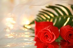 Red roses and a green leaf with reflection under a white wedding veil. Space for text Royalty Free Stock Photos