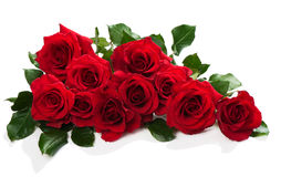 Red roses with green leaves. Red roses in a bunch on a white background with space for text Stock Images