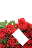 Red roses an greeting card Stock Images