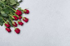 Red roses on grey background. Stock Images