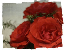 Red rose background. Red rose grunge background with ragged edges Royalty Free Stock Image