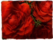 Red roses grunge frame. Red flower close up with texture Stock Illustration