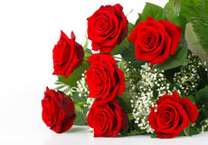 Red roses and gypsophila Stock Images