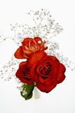 Red roses with Gypsophila Royalty Free Stock Images
