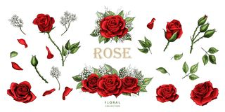 Red roses hand drawn illustration elements colored set royalty free illustration