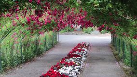 Red roses hanging from arch in garden stock video footage