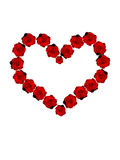 Red roses heart. On white Stock Image