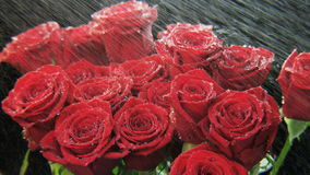 Red Roses in Heavy Rain stock video footage