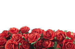 Red roses isolated. Red roses in a bunch isolated on a white background with space for text Stock Photography