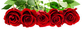 Red roses isolated on white background. Flowers border Royalty Free Stock Photography