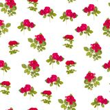 Red roses isolated on white background. Spring flower print for wrapping. Floral ornament for valentine postcard. stock photo