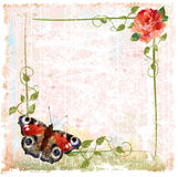 Red roses, ivy and butterfly. Vintage background with red roses, ivy and butterfly Stock Images
