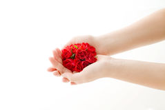 Red roses in lady's hands Stock Photography