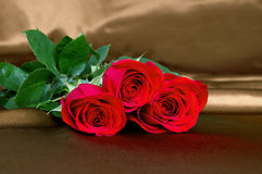 Red roses lay on the fabric Royalty Free Stock Image