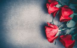 Red roses layout on gray desktop background, top view. Valentines day, dating and love greeting card, anniversary and invitations. Retro styled Royalty Free Stock Photography