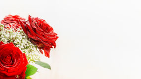 Red roses on light background, close up, banner. Royalty Free Stock Photography