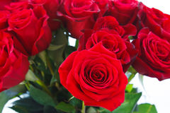 Red roses. Luxurious bouquet of bright red roses. Beautiful flowers for background and texture Royalty Free Stock Images