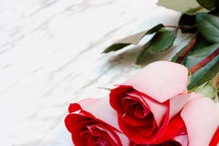 Red roses on a marble background Stock Photography