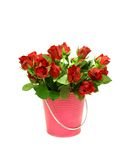 Red roses in metal bucket on white Stock Image